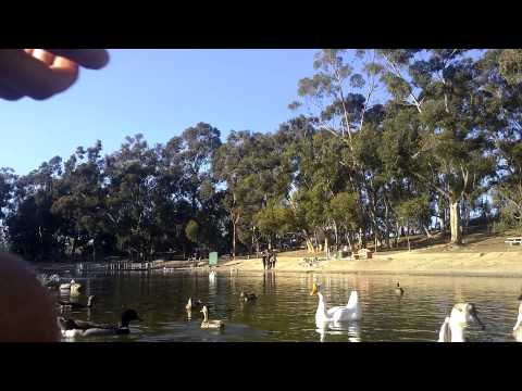 Chollas Lake Park duck feeding
