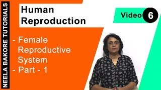 Human Reproduction - Female Reproductive System - Part - 1
