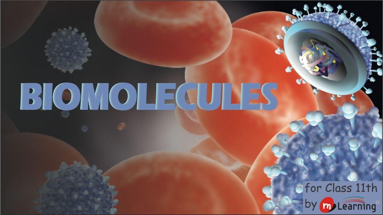 biomolecules class 11 biology akash