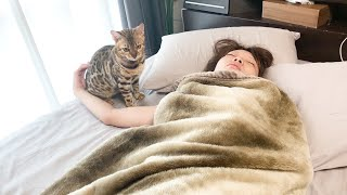 ママの起こし方が雑な猫