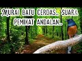 Masteran Murai Batu Pemikat Kicau Murai Batu  Mp3 - Mp4 Download