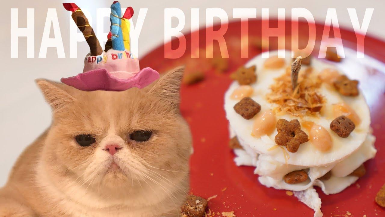 むたさん1歳の誕生日に手作り猫用ケーキをプレゼント!【のぴ】【めめ】