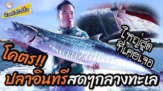 โคตรปลาอินทรีย์-ใหญ่ที่สุดที่เคยเจอ-หัวครัวทัวร์ริ่ง-ep-18