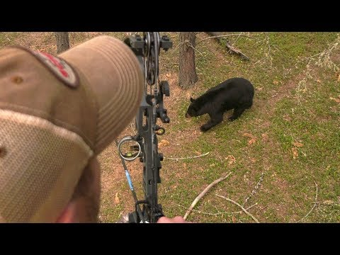 Saskatchewan Spring Bear Hunt