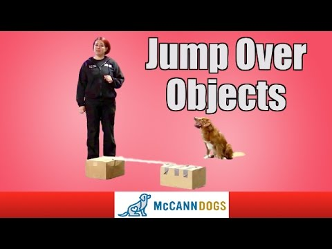 Dog Tricks: Teach Your Dog How To Jump Over Things