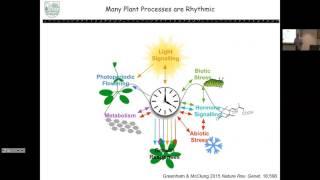 Robert McClung: Natural Variation In Plant Circadian Clock Function