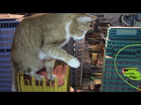Feline King Kong Attacks New York