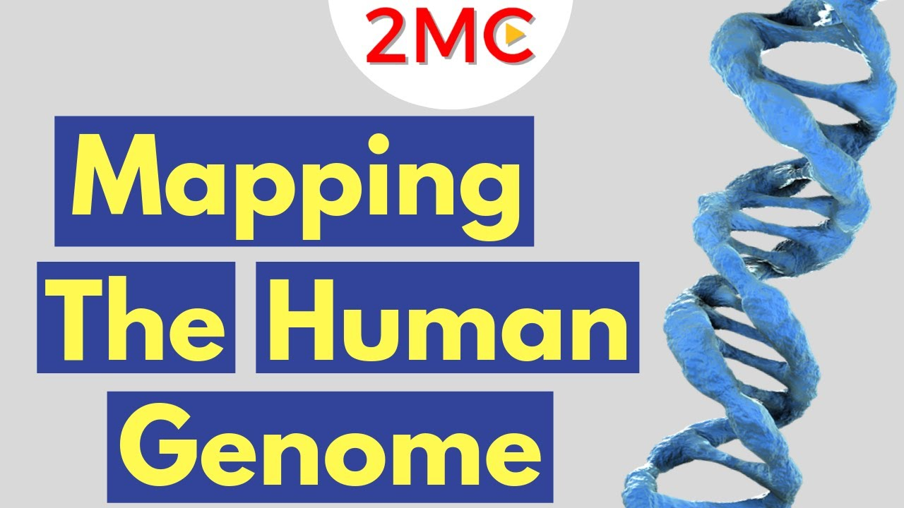 the human genome project Explore the human genome project within us learn about dna and genomics role in medicine and society at the smithsonian national museum of natural history.