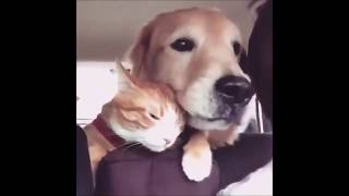 Funny dogs #18