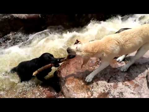 Hero dog saves another dog by Rafael Franciulli perro rescata otro perro