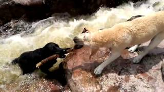 Amazing dog saves another dog by Rafael Franciulli