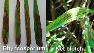 Fungicide programmes in barley