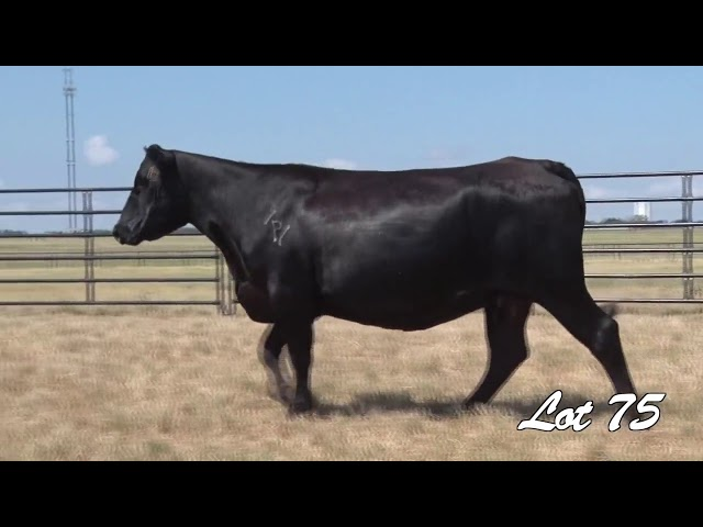Pollard Farms Lot 75