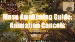 Musa Awakening Guide: Animation Cancels