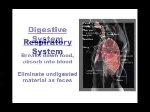 Human Anatomy and Physiology: Organ Systems