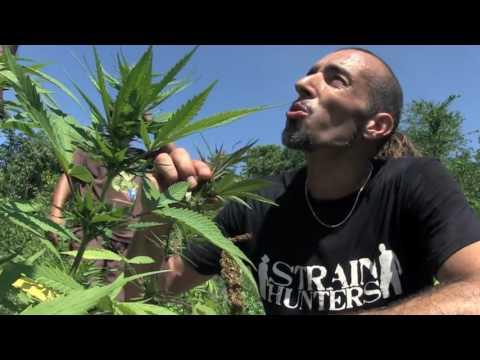 In memory of Franco Loja R.I.P (Greenhouse Seeds)