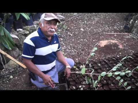 La Lipia y usos para la apicultura
