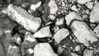 Sweet Queen snake  capture at caesars creek Ohio