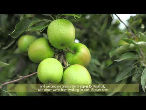 Au coeur des vergers de Pomme / Inside apple's orchards
