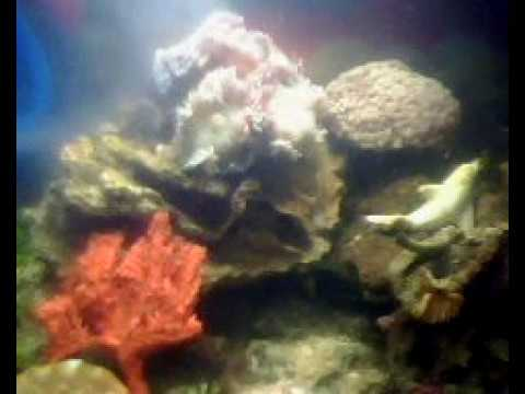 Orange Sponge And Corals