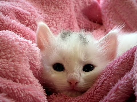 33 Facts About Cats & Kittens