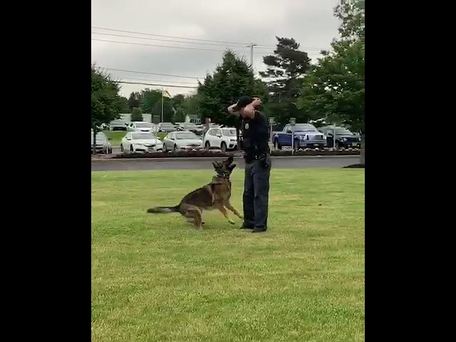 K9 demonstration: Bark and hold command