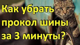 видео Дизайн Сыктывкар