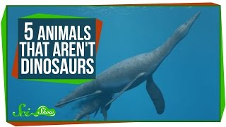 5 Animals That Aren't Dinosaurs
