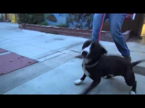 A reação incrível deste cão, depois de ser adotado
