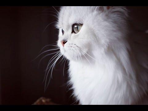 Les 30 plus beaux chats du monde