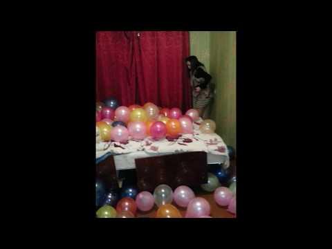 Необычный подарок на день рождения. 1 часть - Ржачные видео приколы