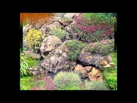 [Garden Ideas] plants for rock gardens