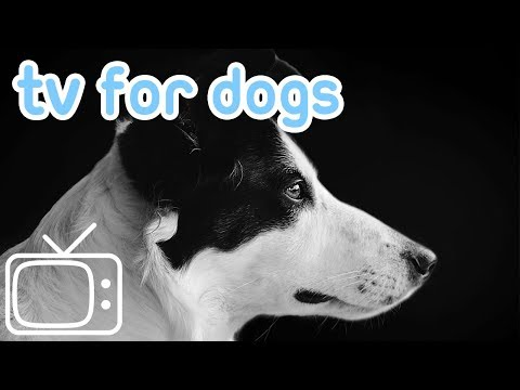 Videos for Dogs! Entertain Your Dog and Reduce Anxiety - TV and Music!