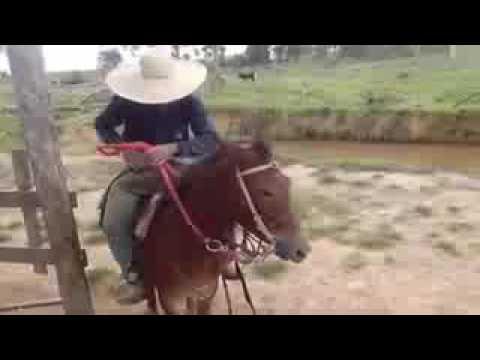 Burros e mulas loucas