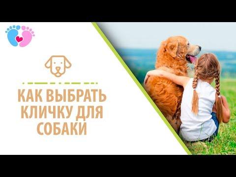 Как выбрать кличку для собаки или щенка?