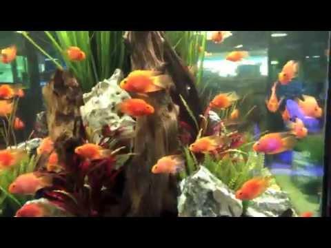 Fish Gallery in Dallas, Texas