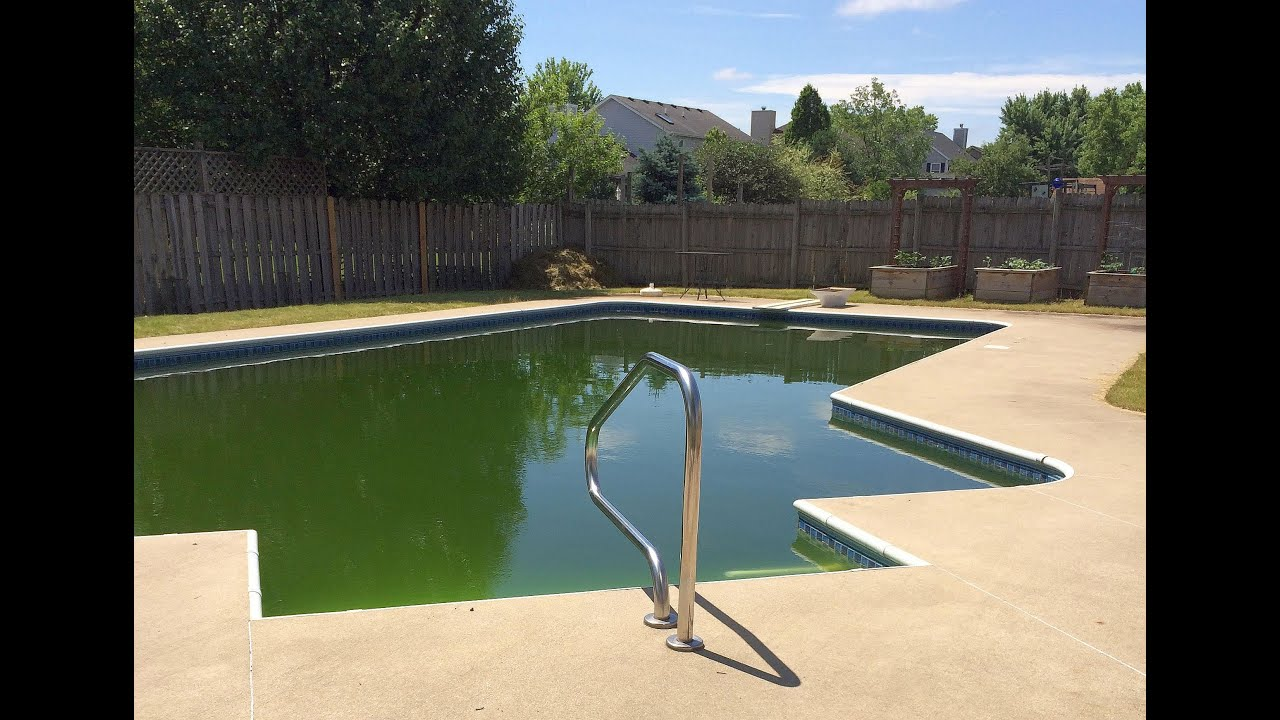 Green Algae Swimming Pools : Swimming pool care video testimony from green algae to