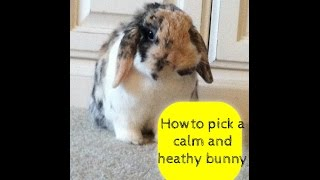 How to choose a calm and healthy bunny