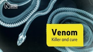 In pursuit of a universal antivenom | Natural History Museum