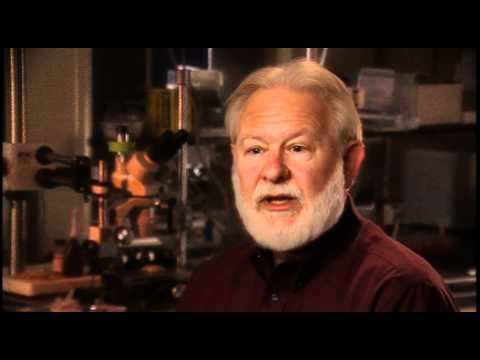 David Nichols: These reports of alien entities are really curious