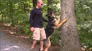 Excited Touch! German Shepherd; Dog Trainers Pittsburgh