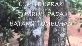 Media video pembelajaran lumut bryophyta 0001