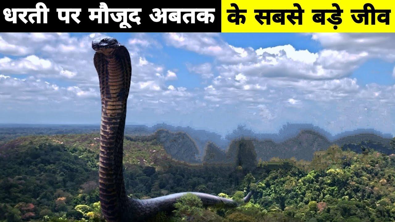 6 Biggest Animals Ever found in The World | धरती पर मौजूद अब तक के सबसे बड़े जीव ।