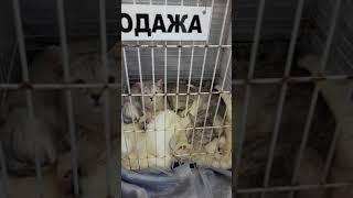 Выставка кошек. Донецк-Сити.