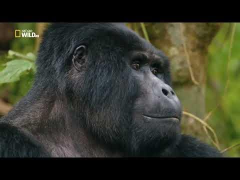 НОВИНКА!!! Дикая Уганда   2019   Документальный фильм  Discovery - Видео онлайн