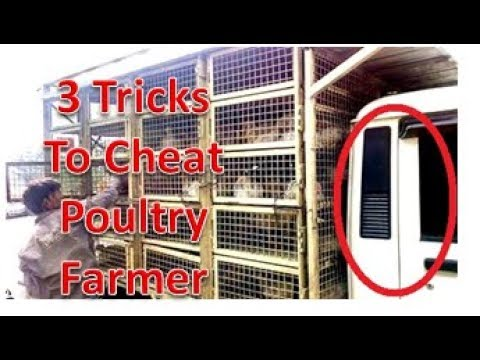🐓  मुर्गी पालक को व्यापारी कैसे लूटते  है ! वीडियो के अंत में रोंगटे खड़े करने वाली जानकारी !