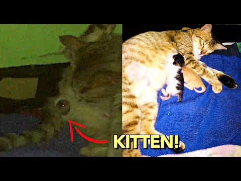 GIVING BIRTH to KITTENS VIDEO 😍 MAMACAT for the FIRST TIME! 🙏
