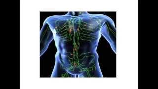 Лимфатическая система и ее роль в дезинтоксикации организма  Применение технологии BioTrEM