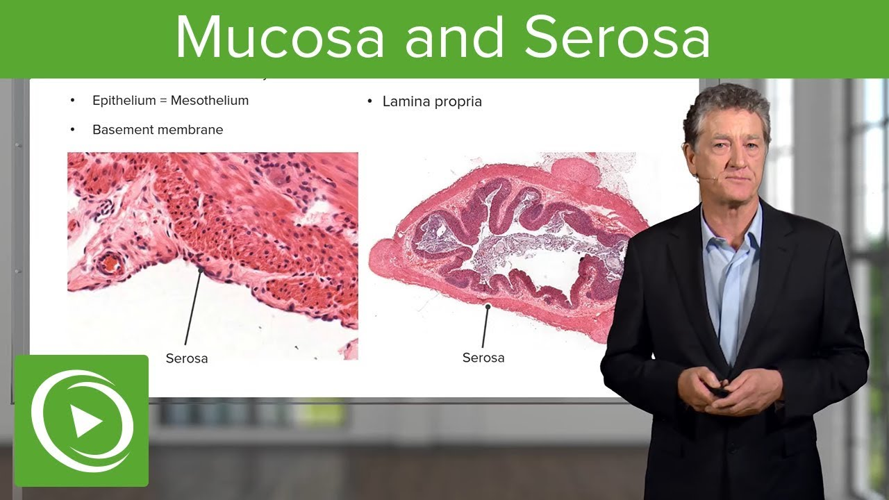 Mucosa and Serosa – Histology | Lecturio