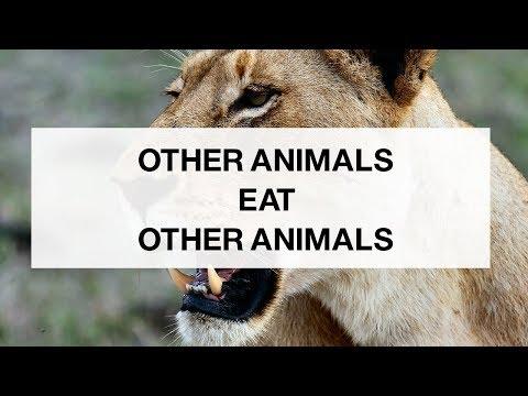 Animals Eat Other Animals